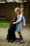 Λίγη μαθήτρια που χαϊδεύει μια μεγάλη μαύρη συνεδρίαση σκυλιών σε ένα λουρί Στοκ Εικόνες