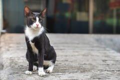 Λίγη μαύρη γάτα με την υπαλληλική συνεδρίαση γατών σημαδιών περιπλανώμενη στο con Στοκ φωτογραφίες με δικαίωμα ελεύθερης χρήσης