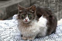 Λίγη περιπλανώμενη γάτα Στοκ εικόνα με δικαίωμα ελεύθερης χρήσης
