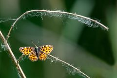 Λίγη πεταλούδα κάθεται σε έναν κλάδο με το σκοτεινό θολωμένο υπόβαθρο Στοκ Εικόνες