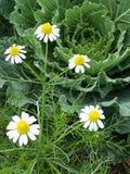 Λίγη πεταλούδα λουλουδιών Στοκ εικόνα με δικαίωμα ελεύθερης χρήσης