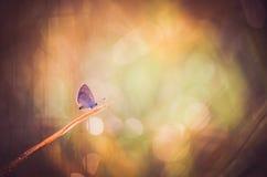 Λίγη πεταλούδα στη φύση Στοκ Εικόνες