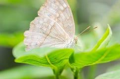 Λίγη πεταλούδα στη φύση Στοκ Φωτογραφία