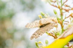 Λίγη πεταλούδα στη φύση Στοκ φωτογραφίες με δικαίωμα ελεύθερης χρήσης