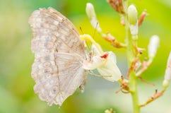 Λίγη πεταλούδα στη φύση Στοκ Εικόνα