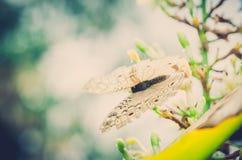 Λίγη πεταλούδα στη φύση Στοκ Φωτογραφίες