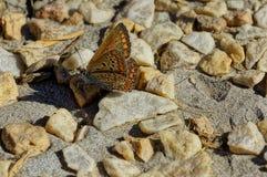 Λίγη πεταλούδα στις κίτρινες πέτρες Στοκ φωτογραφία με δικαίωμα ελεύθερης χρήσης