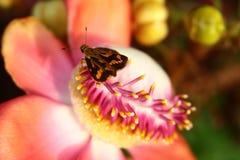 Λίγη πεταλούδα στο λουλούδι Στοκ Φωτογραφίες