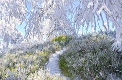 Λίγη πορεία στο δάσος κατά τη διάρκεια του χειμώνα Στοκ εικόνες με δικαίωμα ελεύθερης χρήσης