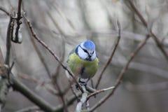Λίγη συνεδρίαση πουλιών στον κλάδο στοκ φωτογραφία