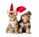Λίγη συνεδρίαση γατακιών και κουταβιών στα κόκκινα καπέλα Χριστουγέννων Στο λευκό Στοκ φωτογραφία με δικαίωμα ελεύθερης χρήσης