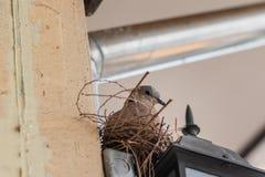 Λίγη φωλιά πουλιών Στοκ φωτογραφία με δικαίωμα ελεύθερης χρήσης