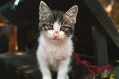 Λίγη χαριτωμένη γάτα Στοκ Εικόνες