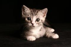 Λίγη χαριτωμένη γάτα Στοκ Φωτογραφία