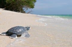 Λίγη χελώνα θάλασσας στην αμμώδη παραλία Στοκ φωτογραφίες με δικαίωμα ελεύθερης χρήσης