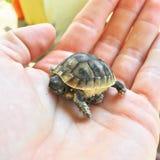 Λίγη χελώνα στοκ εικόνες