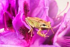 Λίγος βάτραχος μέσα των άγριων λουλουδιών κατά τη διάρκεια του φωτεινού φωτός της ημέρας Στοκ Εικόνες