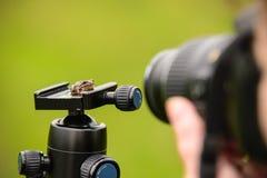 Λίγος βάτραχος μωρών Στοκ εικόνα με δικαίωμα ελεύθερης χρήσης
