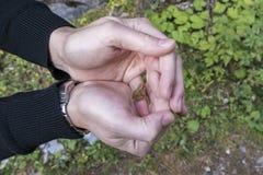 Λίγος βάτραχος σε ένα χέρι μιας γυναίκας Στοκ εικόνες με δικαίωμα ελεύθερης χρήσης