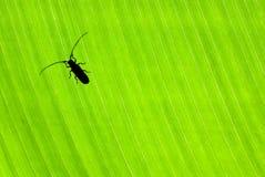 Λίγος κάνθαρος στο πράσινο υπόβαθρο Στοκ Φωτογραφία