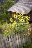 Λίγος κήπος εξοχικών σπιτιών Στοκ Εικόνα