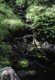 Λίγος καταρράκτης που περιβάλλεται από τις πράσινες εγκαταστάσεις σε ένα δάσος Στοκ Φωτογραφία