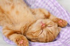 Λίγος κόκκινος ύπνος γατακιών στην πλάτη Στοκ Εικόνες