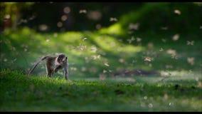 Λίγος μωρό-πίθηκος στο δάσος πιθήκων απόθεμα βίντεο