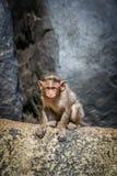 Λίγος πίθηκος σε έναν βράχο Στοκ Εικόνες