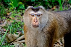 Λίγος πίθηκος στη ζούγκλα στοκ φωτογραφίες με δικαίωμα ελεύθερης χρήσης