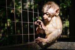Λίγος πίθηκος στο κλουβί, εκλεκτική εστίαση, με το σκοτεινό δραματικό environmanet Στοκ Εικόνα