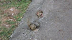 Λίγος πίθηκος τρώει τα φρούτα απόθεμα βίντεο