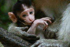 λίγος πίθηκος Στοκ Φωτογραφία