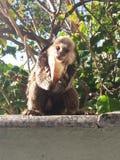 Λίγος πίθηκος Στοκ φωτογραφία με δικαίωμα ελεύθερης χρήσης