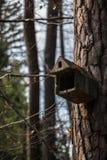 Λίγος πίνακας πουλιών σε ένα μεγάλο παλαιό δέντρο Στοκ Εικόνες