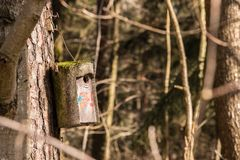 Λίγος πίνακας πουλιών σε ένα μεγάλο παλαιό δέντρο Στοκ φωτογραφία με δικαίωμα ελεύθερης χρήσης