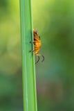 Λίγος πορτοκαλής κάνθαρος στο υπόβαθρο φύσης Στοκ εικόνες με δικαίωμα ελεύθερης χρήσης