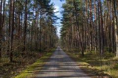 Οδός μέσω του δάσους στοκ εικόνα με δικαίωμα ελεύθερης χρήσης