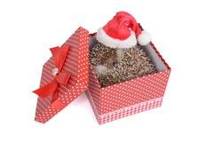 Λίγος σκαντζόχοιρος βρέθηκε στο κόκκινο κιβώτιο δώρων Στοκ φωτογραφία με δικαίωμα ελεύθερης χρήσης