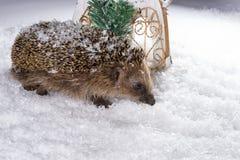 Λίγος σκαντζόχοιρος που ψάχνει για τη χορτονομή στο χιόνι Στοκ εικόνες με δικαίωμα ελεύθερης χρήσης