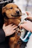 Λίγος στενός επάνω ποδιών κουταβιών γυναίκες που ντύνουν επάνω το χαριτωμένο σκυλάκι σε χιονώδη στοκ εικόνες με δικαίωμα ελεύθερης χρήσης