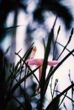 Λίγος τρύγος λουλουδιών στη θέση φύσης Στοκ φωτογραφία με δικαίωμα ελεύθερης χρήσης