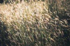Λίγος τρύγος λουλουδιών Στοκ εικόνες με δικαίωμα ελεύθερης χρήσης