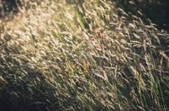 Λίγος τρύγος λουλουδιών Στοκ Φωτογραφίες