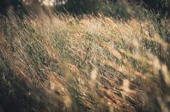 Λίγος τρύγος λουλουδιών Στοκ φωτογραφία με δικαίωμα ελεύθερης χρήσης