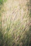 Λίγος τρύγος λουλουδιών Στοκ φωτογραφίες με δικαίωμα ελεύθερης χρήσης