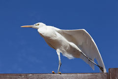 άσπρο πουλί ενάντια στο μπλε ουρανό Στοκ Φωτογραφία