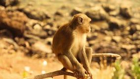 Λίγος χαριτωμένος πίθηκος που τρώει την μπανάνα απόθεμα βίντεο