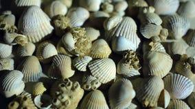 Λίγος, όμορφα κοχύλια θάλασσας με την άμμο και την πλάτη απόθεμα βίντεο