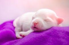 Λίγος ύπνος κουταβιών ύπνου σε μια αιώρα Στοκ εικόνα με δικαίωμα ελεύθερης χρήσης
